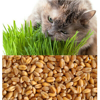 Organic Cat Wheat Grass ~ grown in 14 days ~ Pets Love it! ~ BUY 2 GET 2 FREE