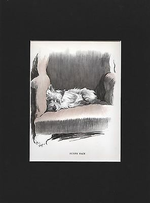 Beautiful West Highland White Terrier by Cecil Aldin 1930 Print 9 X 12  Mat