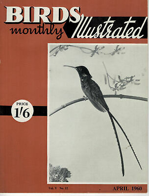 Birds Illustrated Monthly Magazine 1960 April White Series Budgerigars  2666F