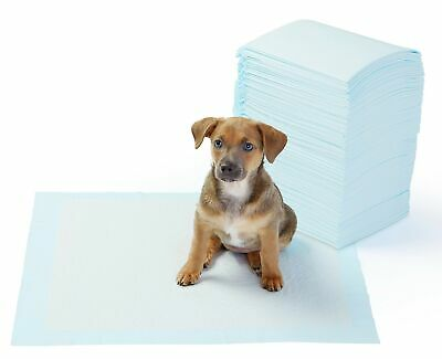 AmazonBasics Regular Size Pet Training and Puppy Pads - Pack of 100