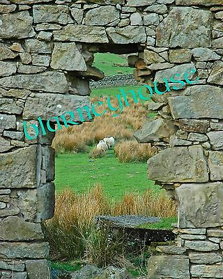 "AWESOME ""WINDOW"" IN AN OLD STONE DWELLING! 8 x 10 PHOTO! FIELD IN SCOTLAND"