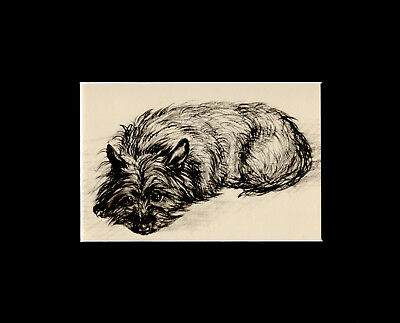 West Higland  Terrier Puppy Dog Print 1937 by Vere Temple 8 X 10 Matted SWEET!