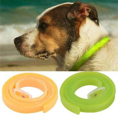 Dog Cat Repel Tick Flea Quick Kill Remover Pet Protection Aroma Neck Collar KV