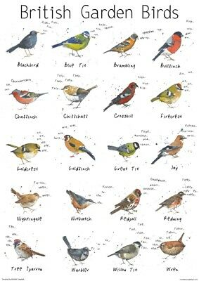 A4 British Garden Bird Poster Nature Animals Wildlife Art Print Gift