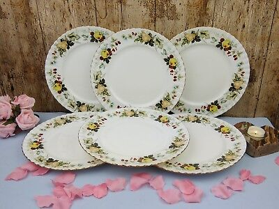 6 X 26cm Royal Vale Harvest Fruits Bone China Dinner Plates Pears Apples Berries