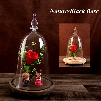Glass Display Bell Jar Dome Cloche With Wooden Base Decor Xmas Desk Vintage