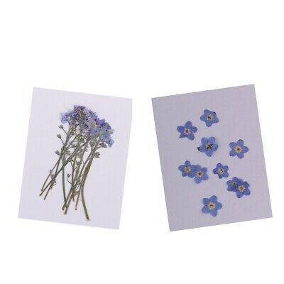 20x Pressed/Dried Flowers Forget me not Scrapbooking Art Craft DIY Materials