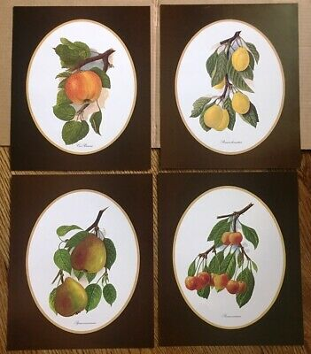 PAINTING FRUITS VEGETABLES IN GOLDEN FRAME PRINT Canvas Wall Art F62 MATAGA .