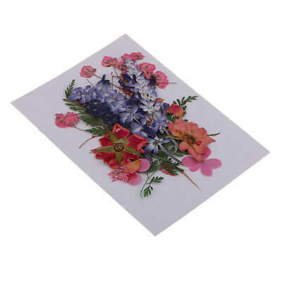Multiple Real Pressed Dried Flowers for Arts Crafts Scrapbooking Card Making