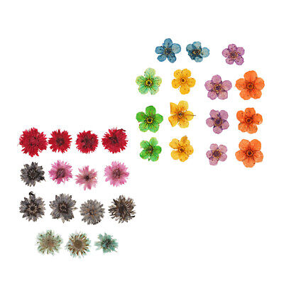 30x Natural Real Dried Flowers Embellishment for Art Craft DIY Nail Art 8mm