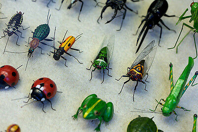 165 x Vintage Insects Books (on DVD)