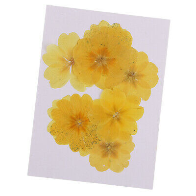 10pcs Pressed Natural Dried Flowers Winter Jasmin for DIY Craft Scrapbooking