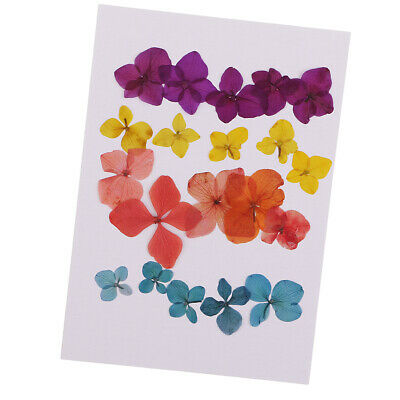 20pcs Pressed Dried Flower Real Flower Hydrangea Scrapbooking Embellishments