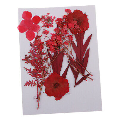 Mixed Red Pressed Dried Flowers Herbarium DIY Arts Crafts Scrapbooking Decor