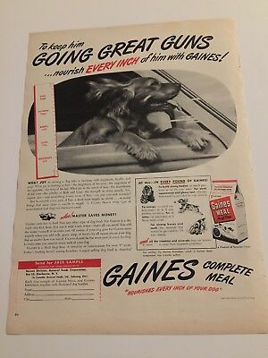 Vintage 1947 Gaines Dog Food Golden Retreiver Hanging Out Car Window Print ad