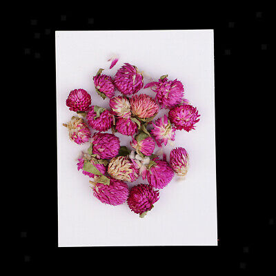 20 Pcs Dried Pressed Flowers Gomphrena Globosa for DIY Scrapbooking Crafts