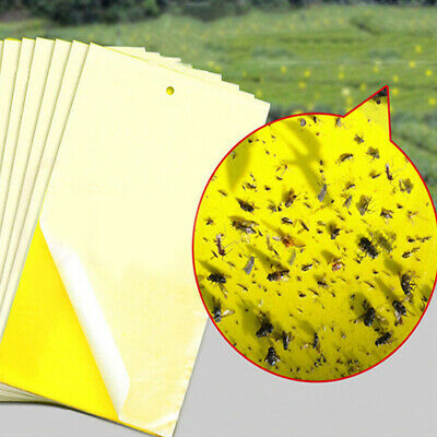 10pcs Large Yellow Greenhouse Sticky Traps - Catch Multiple Flying Insect Pests