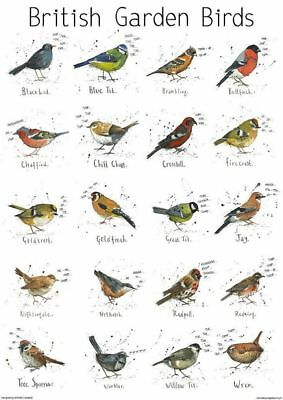 A4 British Garden Birds chart print poster | Nature | Bird | wildlife | gift