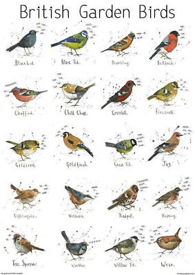A4 British Garden Birds chart print poster | Nature | Bird | wildlife