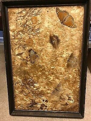 Vintage Real Butterfly Wing Art Leaf Serving Wood Tray or Picture Frame 19 x 13