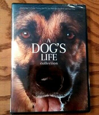 A Dog's Life Collection (DVD, 2019) NEW! 4 Films- Angel Dog/Surviving the Wild..