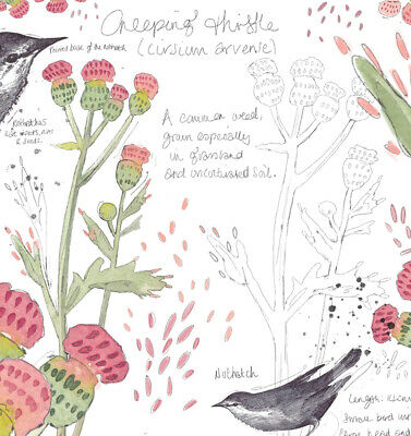 A4 British Wild Flower Chart Bird Nature Wildlife Art Print Animal Garden Gift