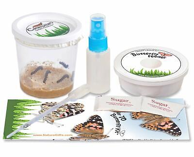 Nature Gift Store 5 Live Caterpillars Shipped Now- Butterfly Kit Refill