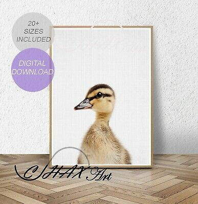 Baby Duckling Print.Nursery Wall Art.Woodland Decor.Animal Prints.Poster.023