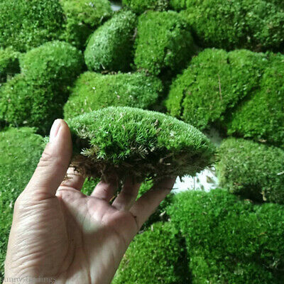Natural Green Moss Live Water Plants Aquarium Fish Tank Landscape DIY Home Decor