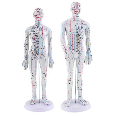 2 Pieces Human Meridian Model Chinese Acupuncture Point Model, Female&Male