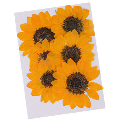 6x Pressed Natural Real Dried Flower Sunflower for DIY Resin Ornament Yellow