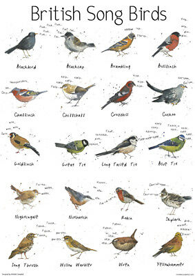 A4 British Song Bird Garden Chart Poster Print Wildlife Nature
