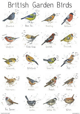Large A2 British Garden Bird Poster Chart Nature Wildlife Art Print Animal Gift