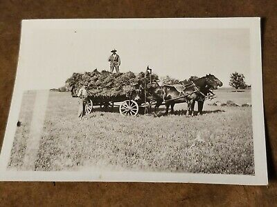 Vintage B&W Photograph - 2 Horse Team Hay Trailer Wagon - Men with Wood Hay Rake