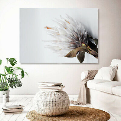 King Protea Print On Stretched Canvas Prints Wall Art Home Picture Flower Deco