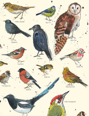 Large A3 British Garden Bird Chart Poster Nature Animal Wildlife Print