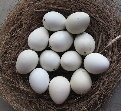 READY TO SHIP 14 (12+2 spares) Blown Empty White Quail Eggs 1 Hole
