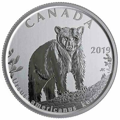 2019 Canada 50 cent Kermode bear from Wildlife treasures set - coin in 2 x 2