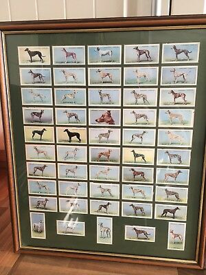 Churchmans Framed Racing Greyhound Card Collection And Framed Greyhound Print