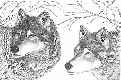 """CAN. Wildlife Wolves Ltd. Print/Pencil drawing """"9X12"""""""