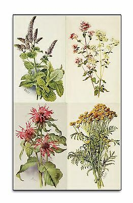 OLD HERB BOOKS on DVD - HERBAL MEDICINE - RARE PLANT REMEDIES MEDICAL BOTANY 274