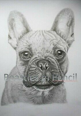 French Bulldog portrait FRAMED signed numbered Limited Edition A4 8 frames