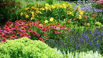 10X Mixed Established Garden Perennial Plants - Come Back Every Year - Potted