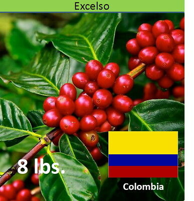 Green Coffee Beans Colombia Popayán Excelso Unroasted, 8 lbs. Gourmet Arabica