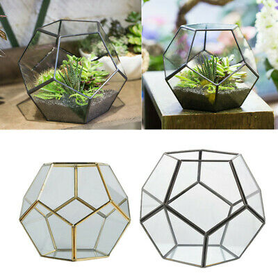 NEW Pentagon Ball Glass Geometric Terrarium Box Tabletop Succulent Plant Planter