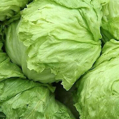 100/200Pcs Delicious Sweet Lettuce Lactuca Home Yard Vegetables Seeds