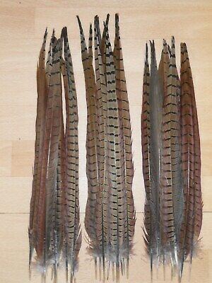"""30 COCK PHEASANT TAIL FEATHERS 17""""to19""""FLY TYING ART& CRAFT FLORAL DISPLAY HATS"""