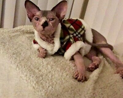 Sphinx cat clothes, Small Dg clothes fluffy pet wear size small Blue Plaid SOFT