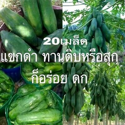 30 Papaya Fruit Seeds Rare Kind Sweet Tropical Edible Bonsai Plants in Garden