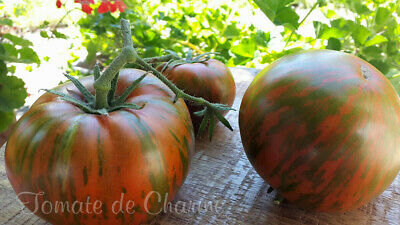 10 graines de tomate rare Chocolate Stripes couleur saveur excellente méth.bio